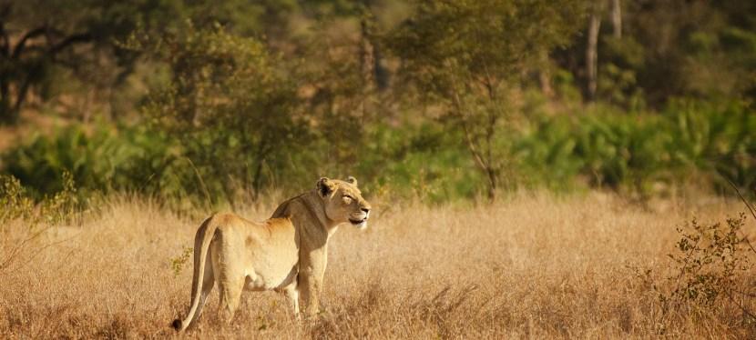 Bushveld Wildlife Safari