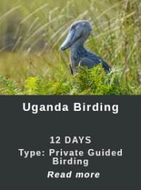 Uganda-Birding-Teaser