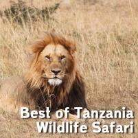 YMA-Tanzania-WIldlife