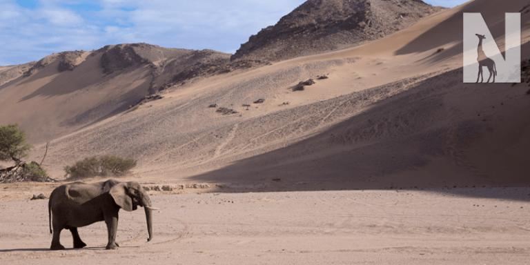 Best-of-Namibia-Header