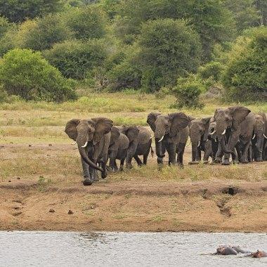 Herd-of-African-Elephants-in-Mana-Pools