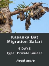 Bat Migration in Zambia