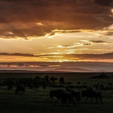 Special Kenya Wildlife Safari