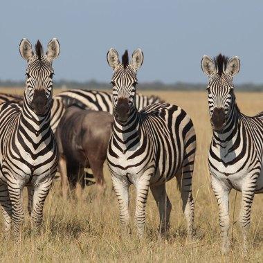 Kenya Wildlife Safari Special