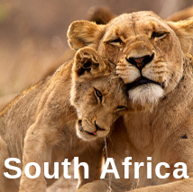African Safaris and Tours