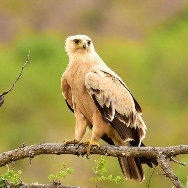 Birding Tours in Africa