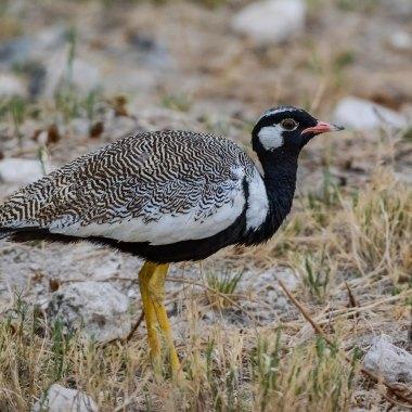 Namibia Endemics Birding