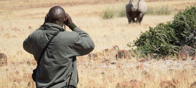 Rhino Walking Safari