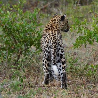 South Africa Birding