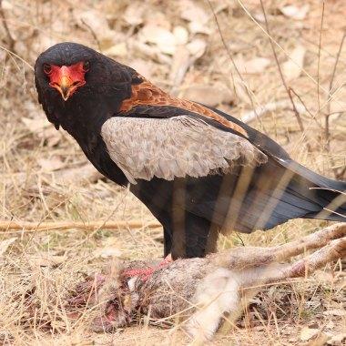 ethiopia birding