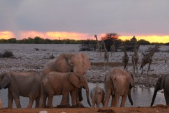 Etosha Elephants at Waterhole