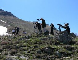 Birders Armenia