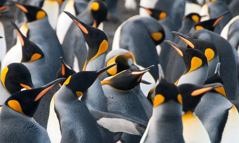 Penguin Day with Nature Travel Birding
