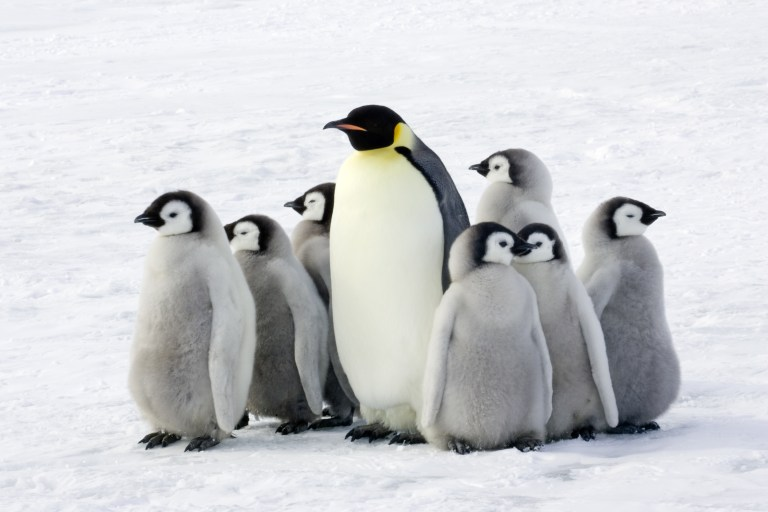 World Penguin Day with Nature Travel Birding