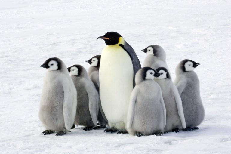 World Penguin Day with Nature Travel Birding