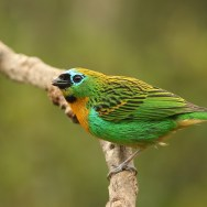 Birding in South America with Nature Travel Birding