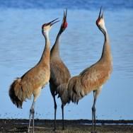 Birding in North America with Nature Travel Birding