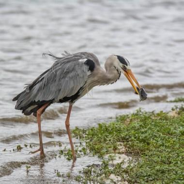 Birding in the Kruger Park