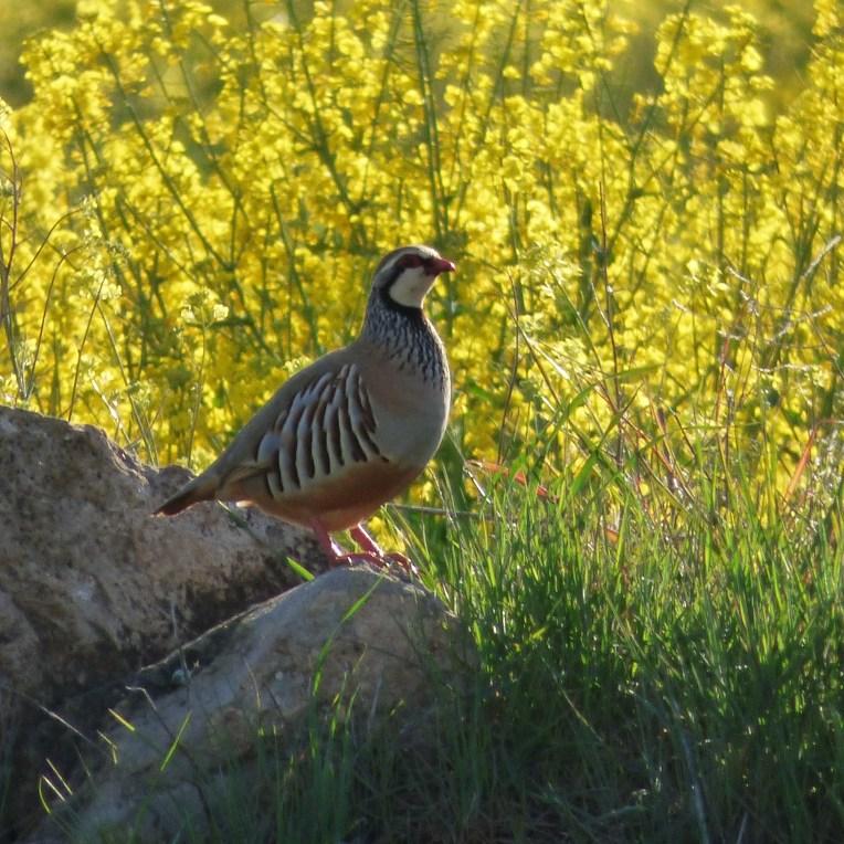 Birding Day Tours