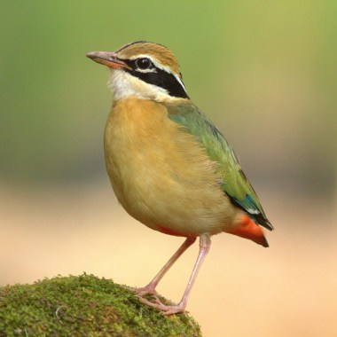 Birding in Southern India