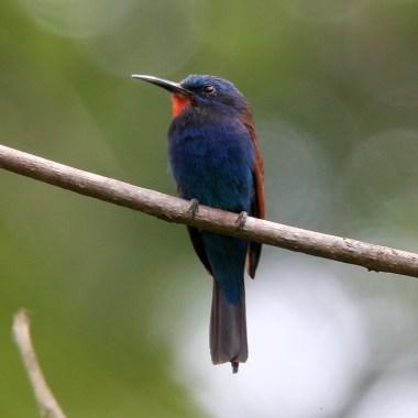 Birding in Ghana