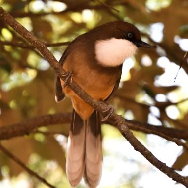 Birding in North India