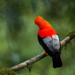 Birding in Peru - Nature Travel Birding