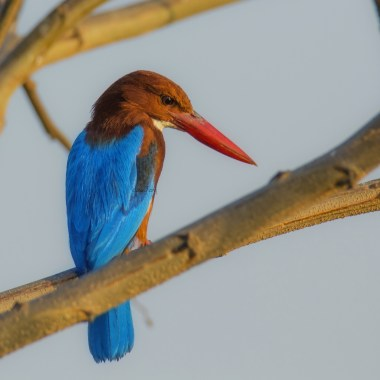 Birding in Sri Lanka
