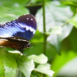 Butterflies of Ghana (5) - Copy