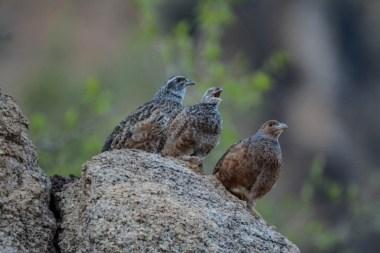 Birding in Namibia