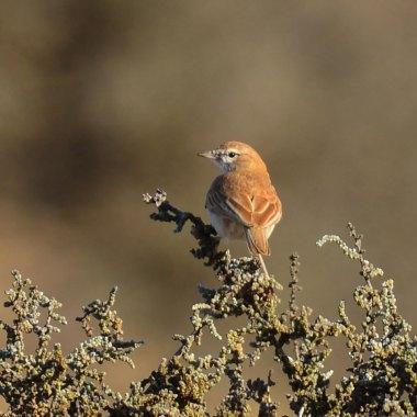 Birding in Namibia Botswana and Zambia