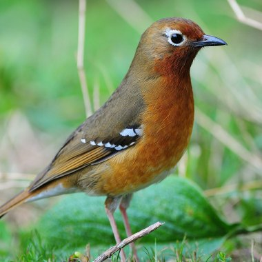 Kenya Birding Tour Special