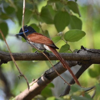 Kenya Birding Tour