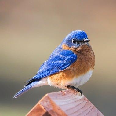 Florida Spring Migration Birding