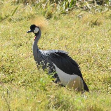 Birding in Tanzania