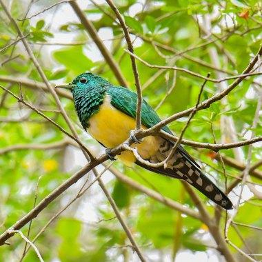 south africa birding tours