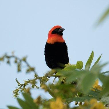 Zimbabwe Birding