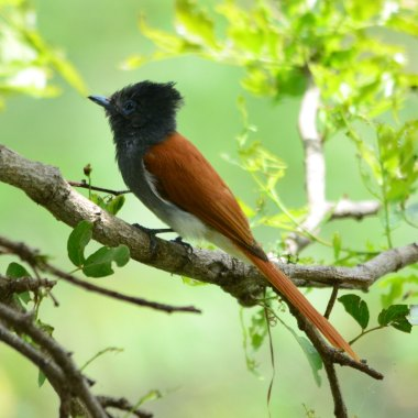 birding in ethiopia
