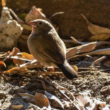Botswana Birding