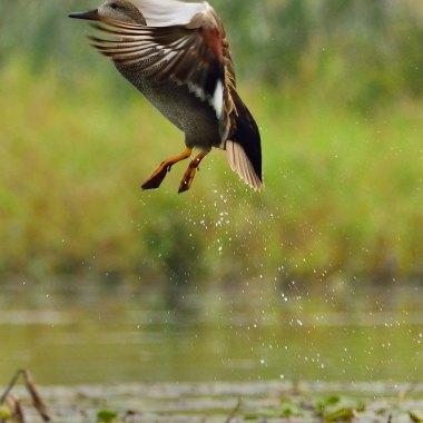North East India Birding