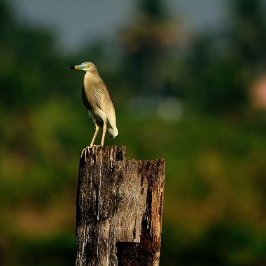 Birding in North India