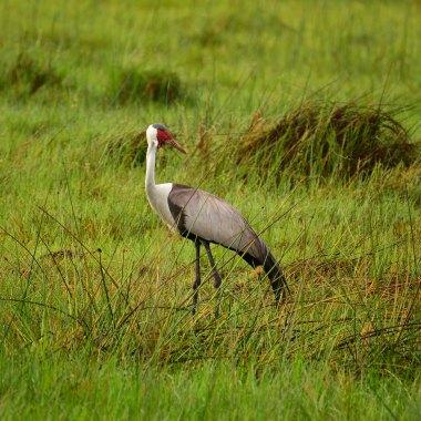 Birding in Botswana
