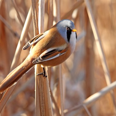 Birding in Europe