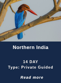 Northern-India