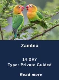 Zambia-Birding