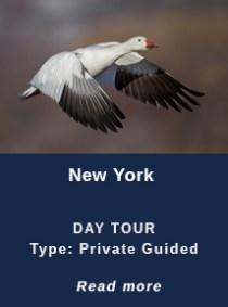NEW-YORK-DAY-TOUR