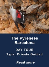 THE-PYRENEES-BARCELONA