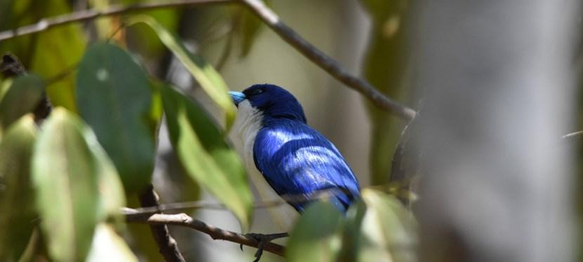 Madagascar Birding