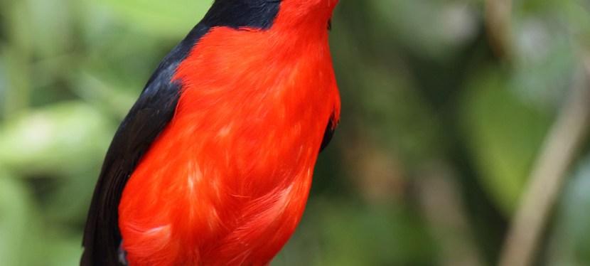 Kenya Birding