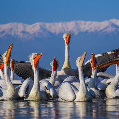 Birding in Mongolia